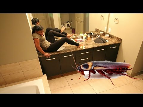 Girl Hilariously Freaks Out Over Fake Cockroach