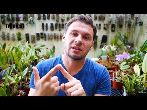 Orchideen lieben diese 5 Dinge / Orchideen Wissen von  ...