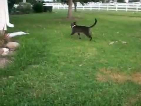 Gracioso gatito cazando un pajarito