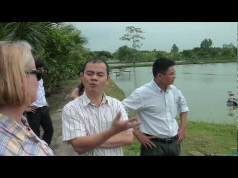 Black Tiger Shrimp Farm Tour in Vietnam – Pond to Processing to Finished Product