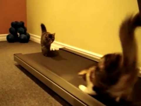 Cats on the Treadmill