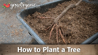 Plant a Bare Root Fruit Tree