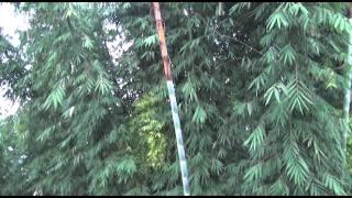 Yunnan Bamboo
