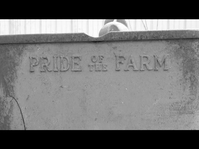 Willson  Dairy  Farm,  Osgood,  Indiana