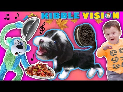 Our Puppy Dog Talking About Food!  Funnel Vis Oreo Songs Compilation Vlog + Climbing Wall T