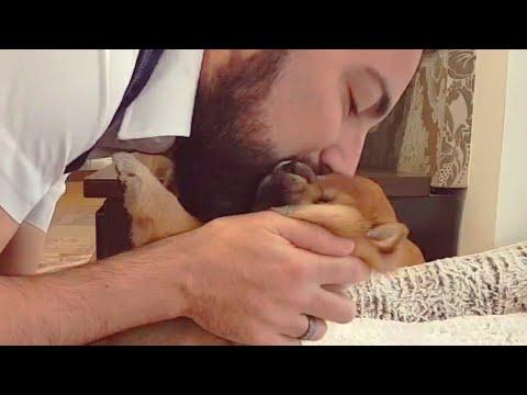 Can't resist squishing & kissing mah potats / Shiba Inu puppies