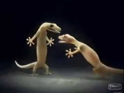 Video Chipkali Love on Aashiqui 2 Song -Tum Hi Ho download in MP3, 3GP, MP4, WEBM, AVI, FLV January 2017