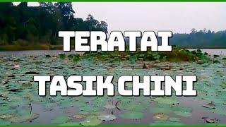 Tasik Chini Malaysia  city photos gallery : Teratai Tasik Chini