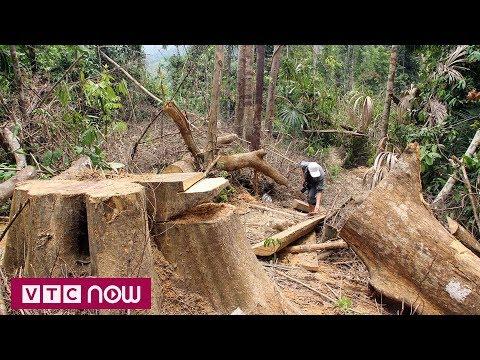 Quảng Nam làm rõ cán bộ tiếp tay phá rừng | VTC1 - Thời lượng: 91 giây.