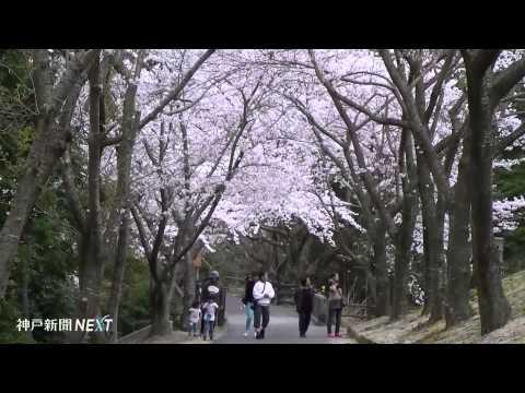 湖を一周する花の回廊 諭鶴羽ダム