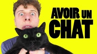 NORMAN - AVOIR UN CHAT - YouTube