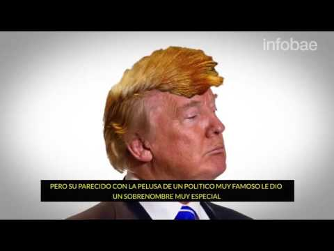 Hallan a la oruga 'Donald Trump' y está en Perú | VIDEO