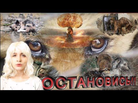 ЛЮДИЧТО ЖЕ ВЫ ТВОРИТЕВИДЕО ДО СЛЁЗ - DomaVideo.Ru