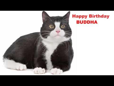 Video Buddha  Cats Gatos - Happy Birthday download in MP3, 3GP, MP4, WEBM, AVI, FLV January 2017