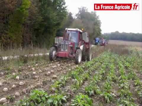 Chantier de betterave fourragère décomposé - tracteur et matériel agricole
