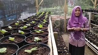 KWT Putri Kelud Desa Sempu, Berdaya Lewat Bunga