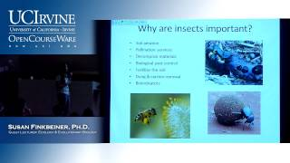 BioSci 94: Organisms To Ecosystems. Lec. 14. Insects