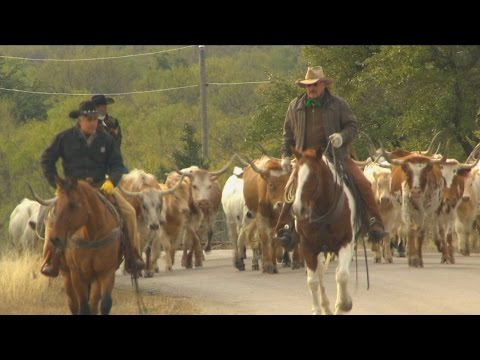 Cattle Drive (Texas Country Reporter)
