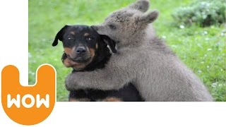 Video Bear Cub Rescued by Family MP3, 3GP, MP4, WEBM, AVI, FLV Mei 2017