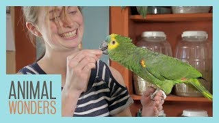 Taylor Trains an Amazon Parrot by Animal Wonders