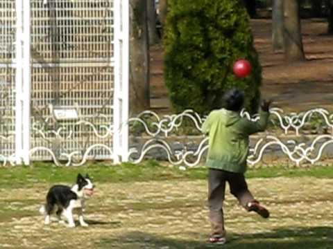 Some brilliant dog I saw the other day in Yoyogi Park, Tokyo.