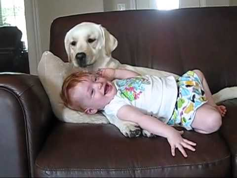 labrador and baby