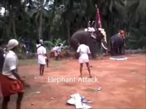 Video Angry Elephant Attack download in MP3, 3GP, MP4, WEBM, AVI, FLV January 2017