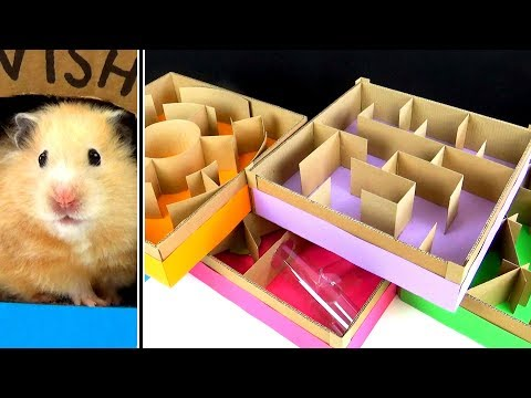 Hamsters Racing Through A FiveLevel Maze