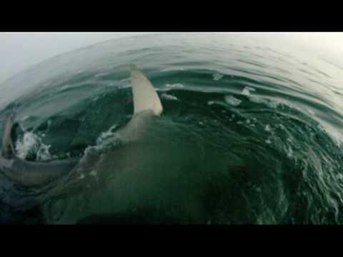 釣上了一條大魚竟然被大白鯊搶走,手還差點被咬斷…(02:30)開始