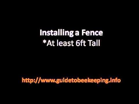 Beekeeping For Beginner – 2 Tips About Backyard Beekeeping