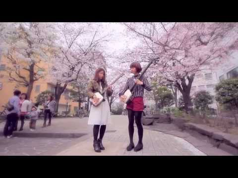 Shamisen Girls Play Under the Cherry Blossoms