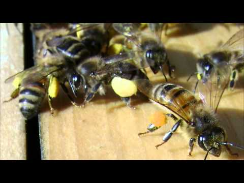 mudsongs.org: 567 Days of Beekeeping Photos