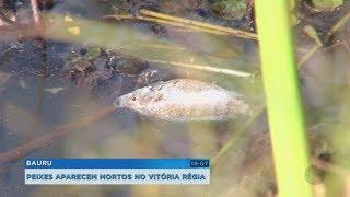 Bauru: peixes são encontrados mortos no lago do Parque Vitória Régia
