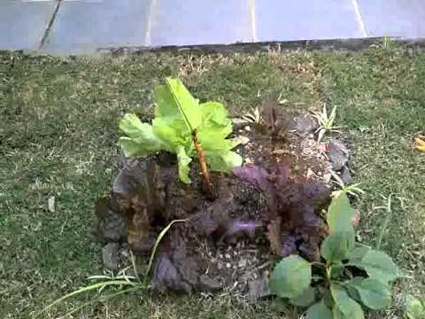 Novo jardim da Zaza!