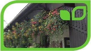 #1379 Der schönste Balkon von Slowenien