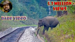 Video Elephant Tried Many Times To Jump A Small Drain. MP3, 3GP, MP4, WEBM, AVI, FLV Mei 2017