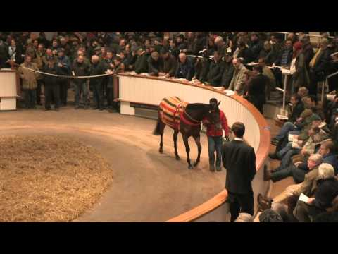 2013 Tattersalls December Mare Sale Day 2