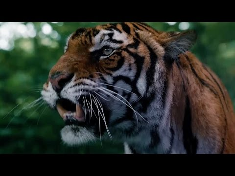 Face To Face With A Tiger | In The Forest Of The Night | Doctor Who | BBC