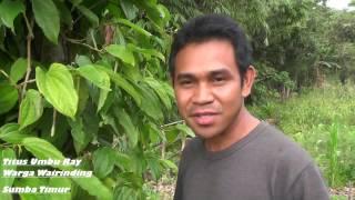 Sumba Pulau Organik