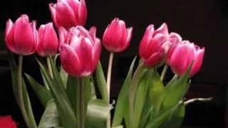 Tulips Overnight