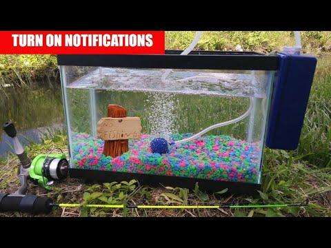 Catching PET Exotic Fish for Aquarium! Help me Name it!_Legjobb videók: Akvárium