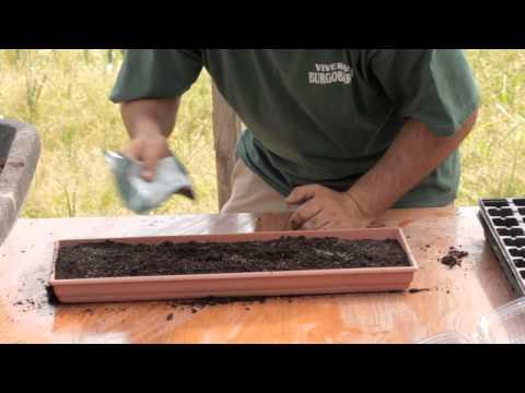 Cómo sembrar zanahoria//Balcón comestible//LlevamealhuertoTv