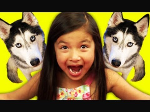 Kids React to Husky Dog Talking