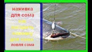ловля и наживка сома на реках