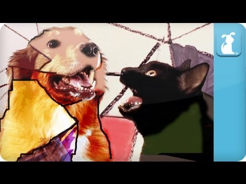 gotye - Dogtye featuring Katra (music video parody) - Somebody That I Used To Know BEHIND THE SCENES: http://goo.gl/YkBsI Subscribe to The Pet Collective: http://ful...