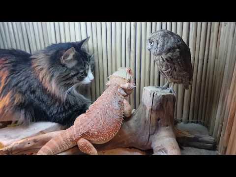 Сова, ящерица и кот соображают на троих чудо-порошок, закусывая тараканами