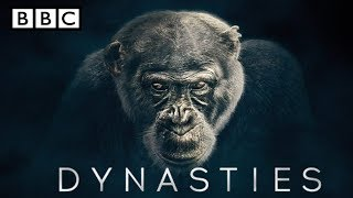 BBC America Dynasties chimpanzee | Episode 1 - The Ruler | BBC Dynasty highlights