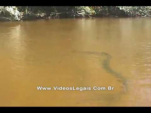Sucuri de quase 10 metros no Rio Cristalino, MT
