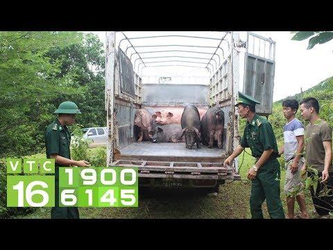 """Quản lí thị trường """"tổng tấn công"""" dịch tả lợn Châu Phi I VTC16 - Thời lượng: 2 phút, 17 giây."""