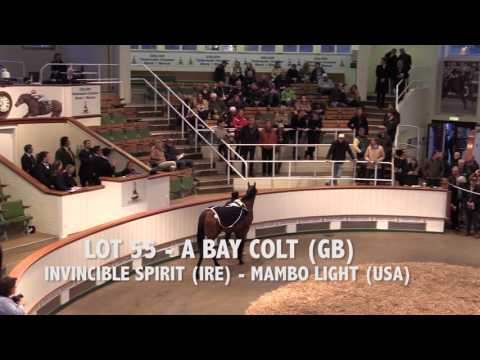 Tattersalls Craven Breeze Up Sale Day 1 Video Review 2016